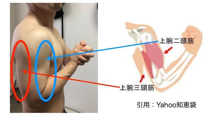 腕の筋肉解説